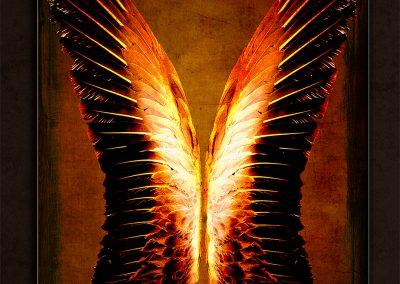 Wings_34x24